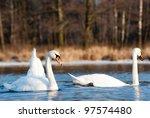 Swan On Blue Lake Water In...