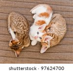 Stock photo three kittens 97624700