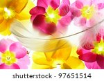 Colorful Flower Petals With...