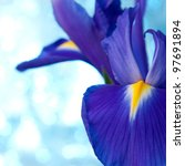Beautiful Blue Iris Flowers...