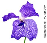 Close Up Photo Of Blue Orchid...