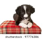 Stock photo cute week old border collie puppy on a red pillow 97776386