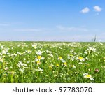 Grass Land Flowers Blooming...