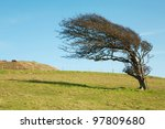 windswept tree at the top of a hill - stock photo
