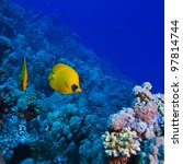 underwater deep blue sea coral garden with butterfly fish and many other kinds of fihsh - stock photo