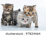 group of small 3 weeks old... | Shutterstock . vector #97824464
