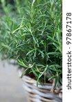rosemary in a basket   Shutterstock . vector #97867178