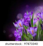 Crocus Spring Flowers Design...
