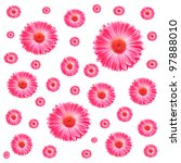 Frame Pink Gerbera Flowers Isolated On White - stock photo