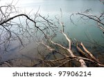 Lake With Dead Wood In The Mist