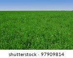 clover and grass field...   Shutterstock . vector #97909814