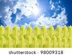 Green leaf and blue sky - stock photo