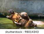 hippo  hippopotamus  open its... | Shutterstock . vector #98014343