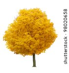 Autumn Fall Orange Maple Tree...