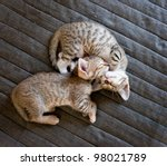 Stock photo two cute kittens sleeping on bed cover 98021789
