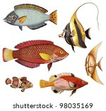 Tropical Fish Collection   Old...