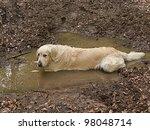 Fun Golden Retriever Dog...