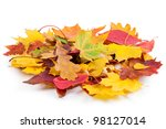 Heap Of Autumnal Leaves....