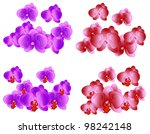 orchid | Shutterstock .eps vector #98242148