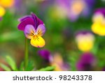 Heartsease Or Johnny Jump Up ...