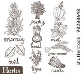 Culinary herbs set