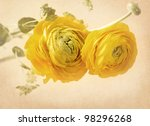 Ranunculus Flowers On Yellow...