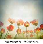 Easter Spring background with beautiful  yellow tulips in late afternoon sunset. - stock photo