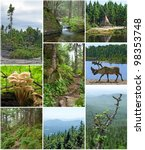 summer beauty of forests in... | Shutterstock . vector #98353748