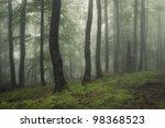 Green Forest After A Summer Rain