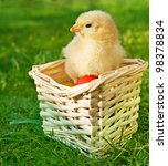 little chicken in the basket... | Shutterstock . vector #98378834