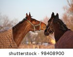 brown and black horses playing... | Shutterstock . vector #98408900