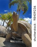 Stock photo giant turtle in mauritius 98409236