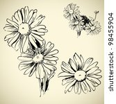 Camomile  Ink Drawing