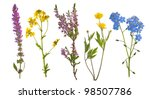 Stock photo wild flowers collection isolated on white background 98507786
