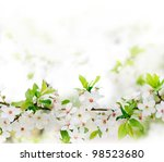 White Spring Flowers On A Tree...