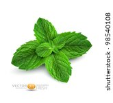 Vector Fresh Mint Leaves On A...