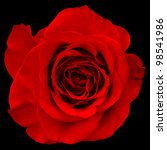 Red Rose Isolated On Black...