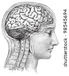 human brain   vintage... | Shutterstock .eps vector #98545694