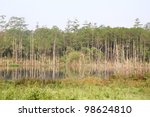 Swamp In Tropical Rain Forest