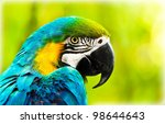 Exotic Colorful African Macaw...