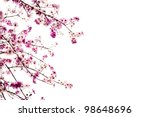 Stock photo branch of beautiful pink flower isolated on white background 98648696