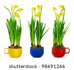 yellow narcissus and daffodil...   Shutterstock . vector #98691266