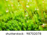 Fresh moss and water drops in green nature or in old stone or old wall - stock photo