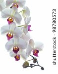 white orchid flower isolated on ...   Shutterstock . vector #98780573