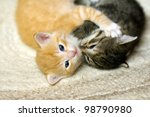 Stock photo pair of little kittens playing 98790980
