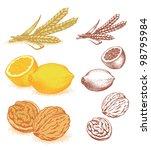 grain  lemons  walnuts | Shutterstock .eps vector #98795984