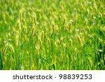 green wheat field texture  ...   Shutterstock . vector #98839253