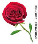 beautiful red rose isolated on... | Shutterstock . vector #98854958