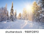 Winter In Deep Forest. Sunny...