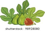 fig  figs | Shutterstock .eps vector #98928080